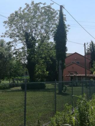 Terreni agricoli in Affitto a San Biagio di Callalta